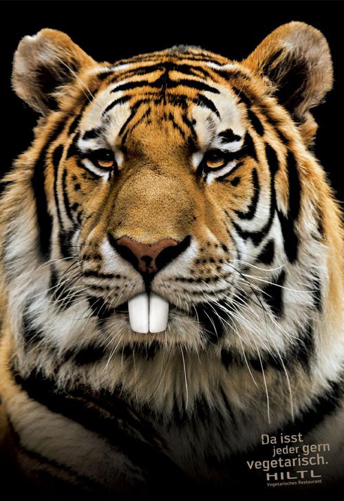借用狮子,豹,老虎这些肉食动物从侧面说明他们的食物非常美味.